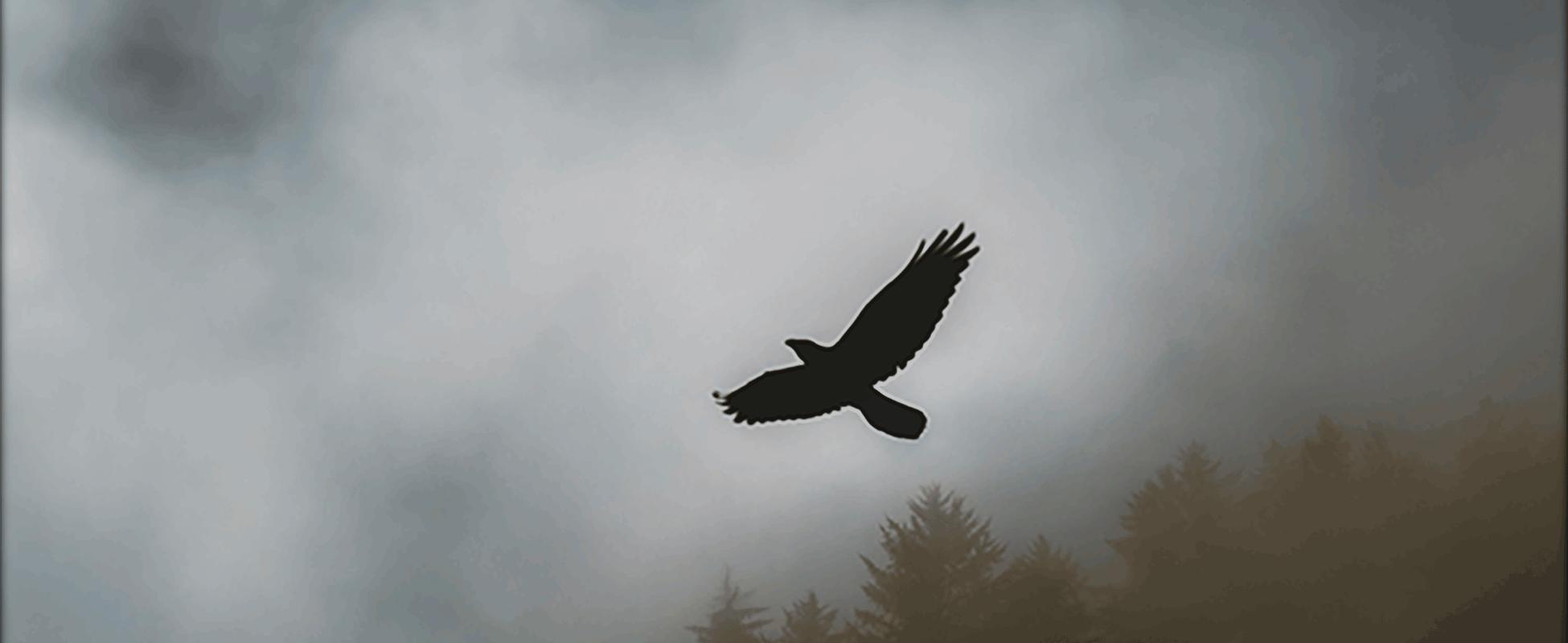 Felpa black hawk
